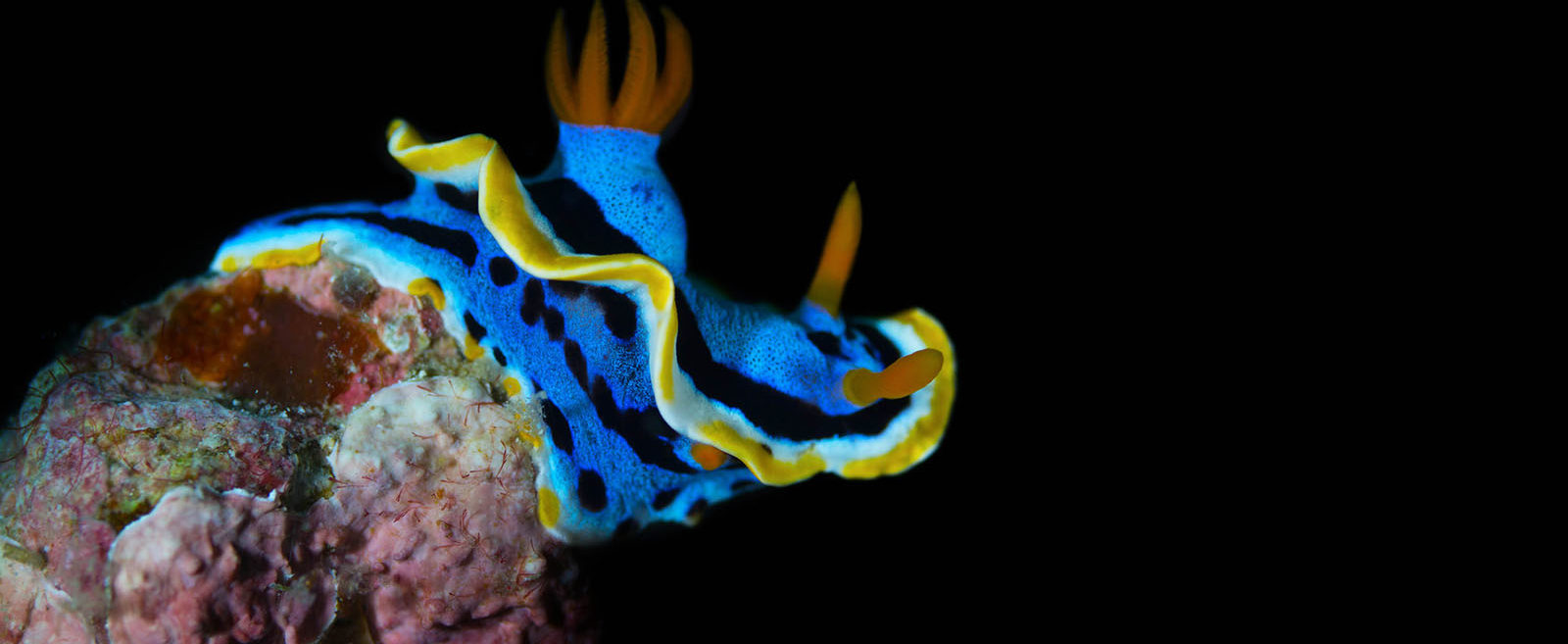 Philippines, Moalboal, Nudi Branch