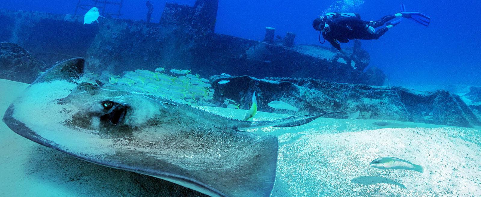 Mexico, Isla Mujeres, Canonero 55 Wreck, Sting Ray