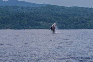 Philippines, Calayan Islands, Whale watching