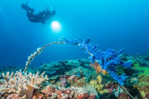 Philippines, Palawan, Puerto Princesa, diver with coral arch