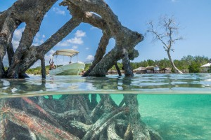Philippines, Palawan, Puerto Princesa, boat at the mangroves
